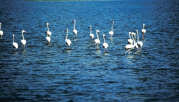best indian bird sanctuaries, flamingos in Chilka Lake, Orissa tourist attractions, India travel magazine online