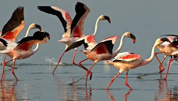 Flamingos in Rann of Kutch, bird sanctuaries in Gujarat, IndianEagle Travel