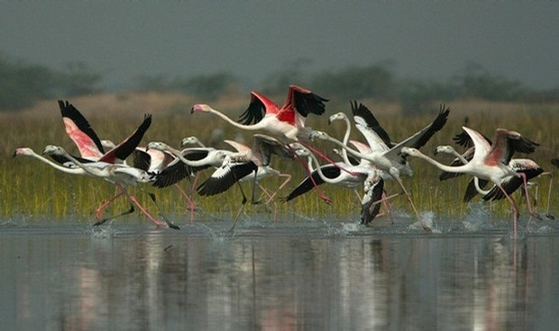 top ten bird sanctuaries in India, IndianEagle travel blog