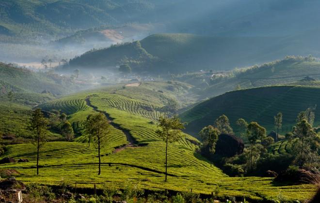 Kerala tourism monsoon, Kerala India, tea estates of Kerala