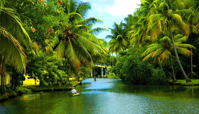 coconut facts, coconut trees in kerala, world coconut day, Indian Eagle travel
