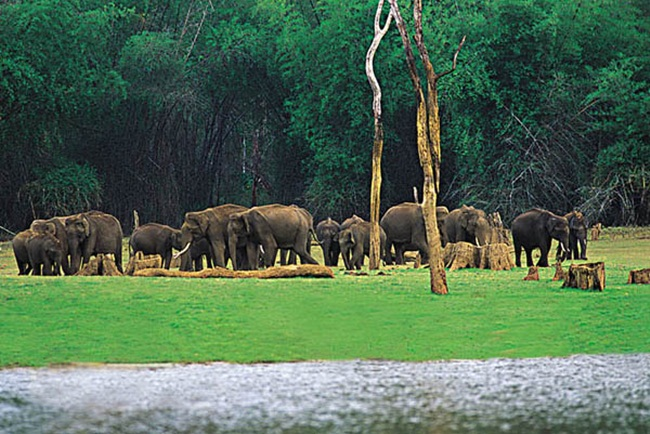 thekkady in kerala, kerala tourism, sightseeing in thekkady, IndianEagle travel