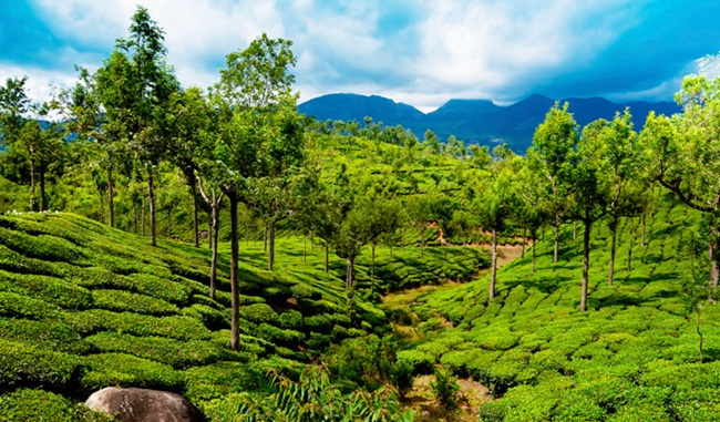 thekkady in kerala, kerala tourism, sightseeing in thekkady, Indian Eagle travelbeats