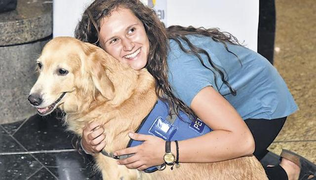 therapy dogs at airports, therapy dogs at Mumbai airport, US airports