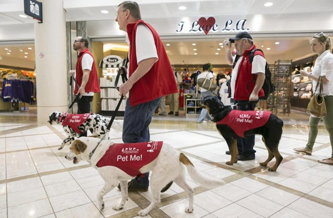 therapy dogs in USA, airport therapy dogs, US airports
