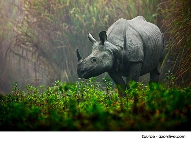 Kaziranga Express, northeast India, trains to Assam, Kaziranga national park, wildlife tours India
